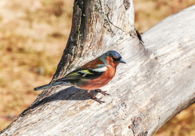colorful bird sitting on a tree